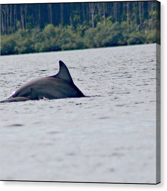 Dolphins Canvas Print - #dolphins #bocasdeltoro #panama by Kayla  Pearson