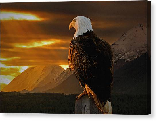 Bald Eagle Canvas Print - Domain by Ron Day
