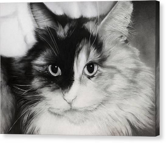 Domestic Cat Canvas Print