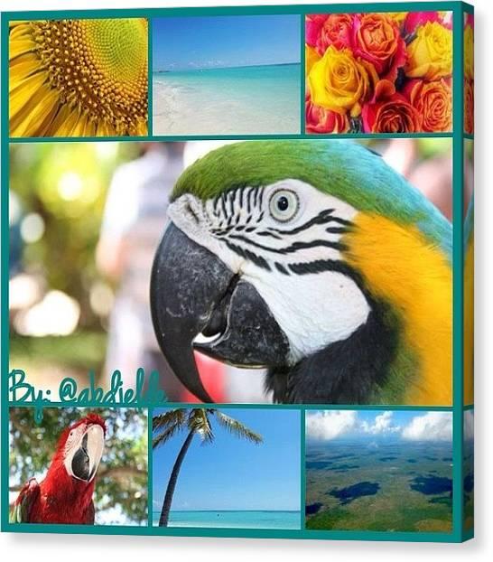 Macaws Canvas Print - #dominicanrepublic #puntacana by Abdy Du