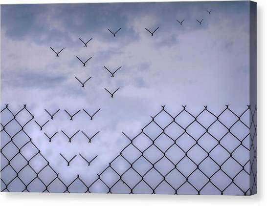 Flight Canvas Print - Dona??t Fence Me In! by Bjorn Emanuelson