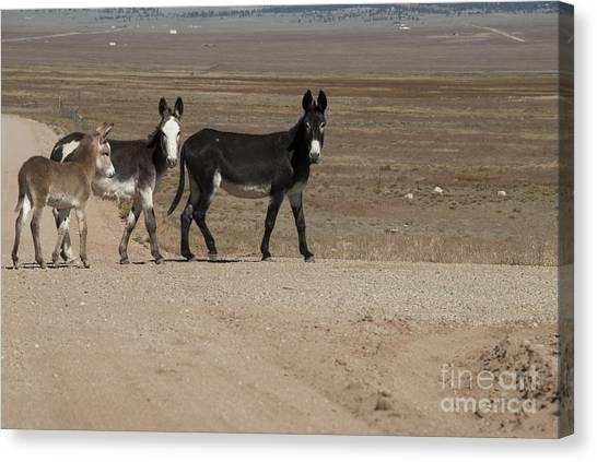 Country Roads Canvas Print - Donkey Family by Juli Scalzi