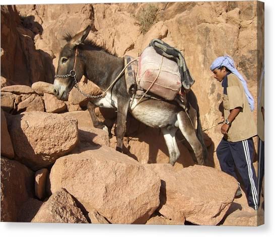 Donkey Of Mt. Sinai Canvas Print