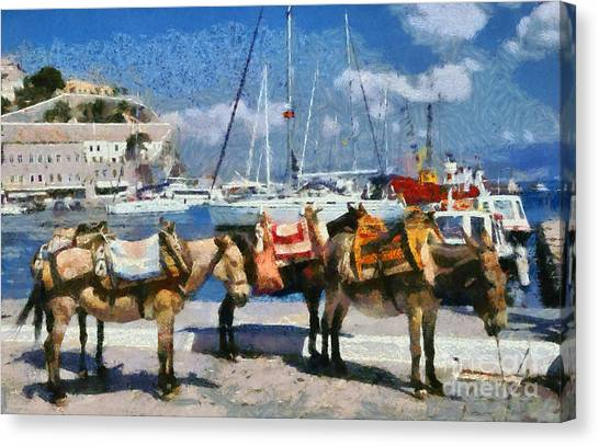 Donkeys Waiting For A Ride Canvas Print