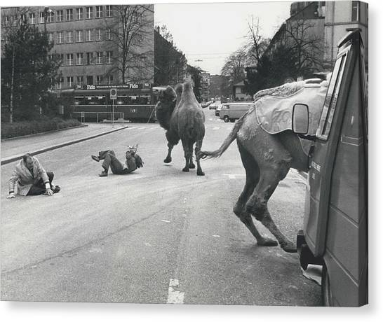 Don�t Move To New Address By Camels! Canvas Print by Retro Images Archive