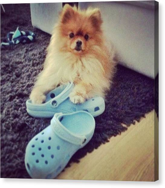 Pom-pom Canvas Print - Don't Touch My Brand New #crocs #shoes by Stewy Buothz