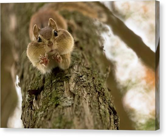 Squirrels Canvas Print - Don't You Even Try To Grab My Nuts! by Lucie Gagnon