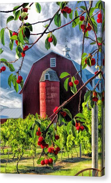 Door County Cherry Harvest Red Barn Canvas Print