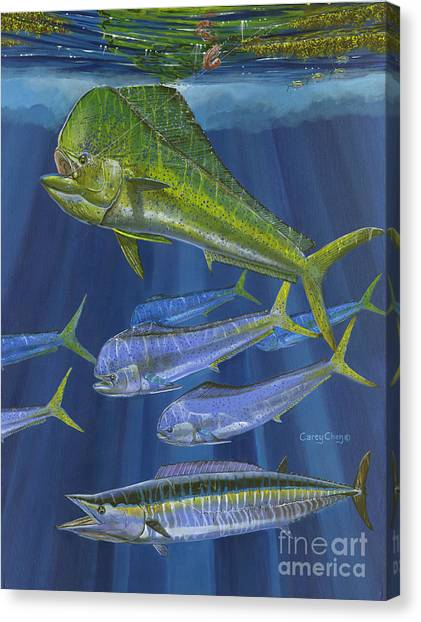 Spearfishing Canvas Print - Dorado Rip Off0057 by Carey Chen