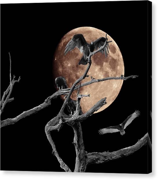 Dormant Dreams 2 Canvas Print