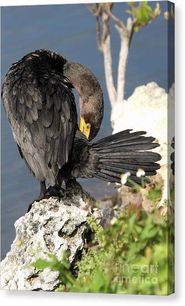 Cormorant Preens Canvas Print