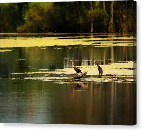 Double Crested Cormorants Canvas Print by Scott Hovind