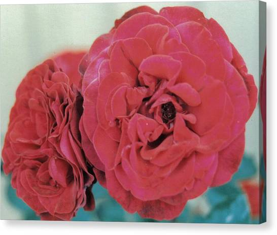 Double Desert  Red Roses Canvas Print by Dusty Rose