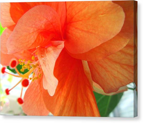 Double Peach Canvas Print
