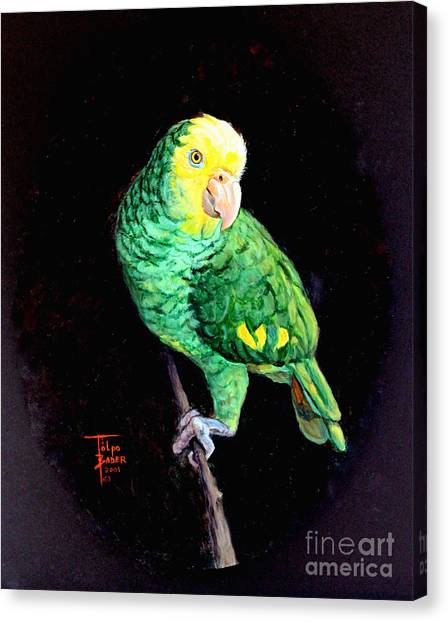 Double Yellow Headed Amazon Paco Canvas Print