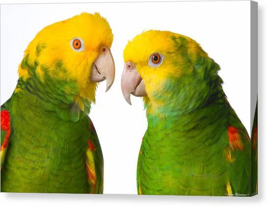 Double Yellow-headed Amazon Pair Portrait Canvas Print