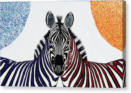 Double Zebra Canvas Print by Patrick OLeary
