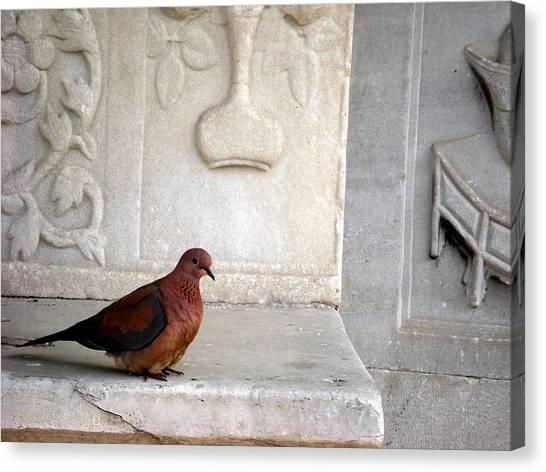 Dove On Historic Art Canvas Print