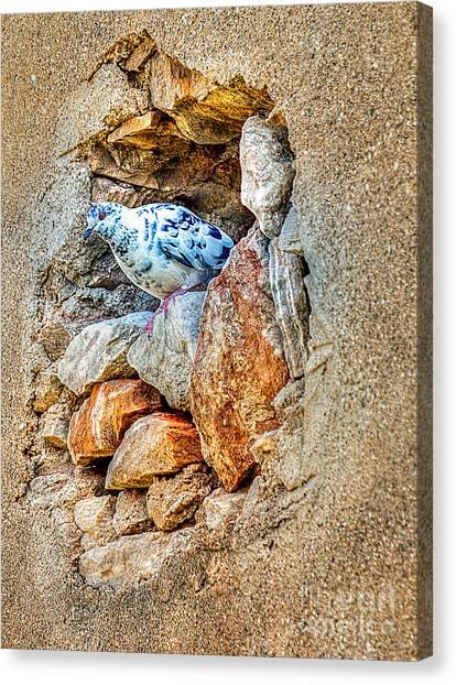 Dove's Nest Canvas Print