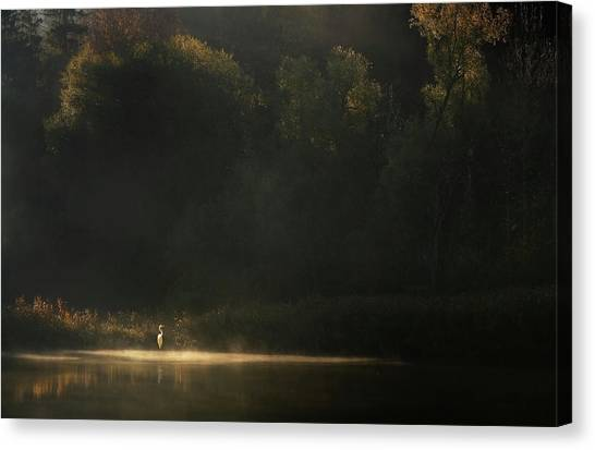 Heron Canvas Print - Down By The River by Norbert Maier