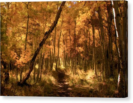 Canvas Print - Down The Golden Path by Donna Kennedy