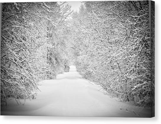 Down The Lane Canvas Print by BandC  Photography