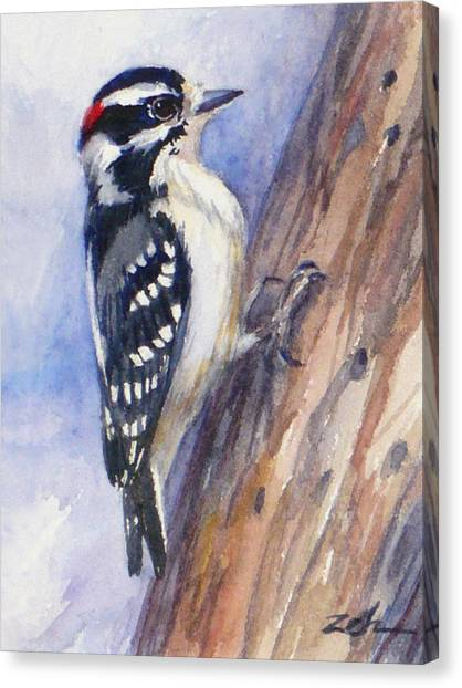 Downey Woodpecker Canvas Print