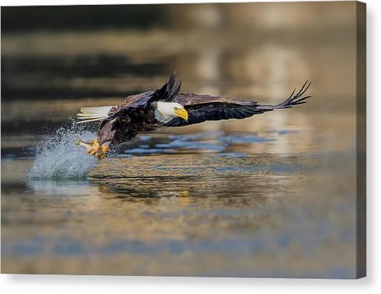 Eagles Canvas Print - Drag by Rob Li