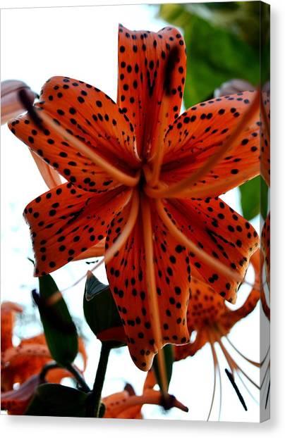 Dragon Flower Canvas Print