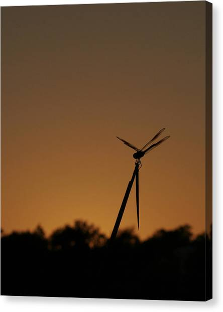 Dragon Fly Silhouette Canvas Print
