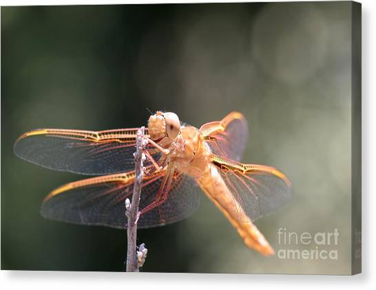 Dragon Fly Canvas Print by Laura Paine