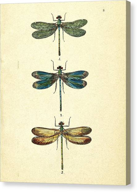 Dragonfly Canvas Print - Dragonflies by Pati Photography