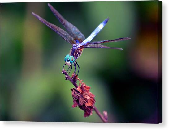 Dragonfly 2 Canvas Print