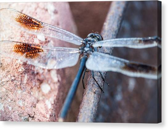 Balance Beam Canvas Print - Dragonfly Balance Beam by Sherie Sadlier