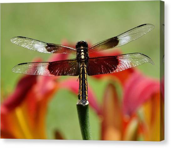 Dragonfly Beauty Canvas Print
