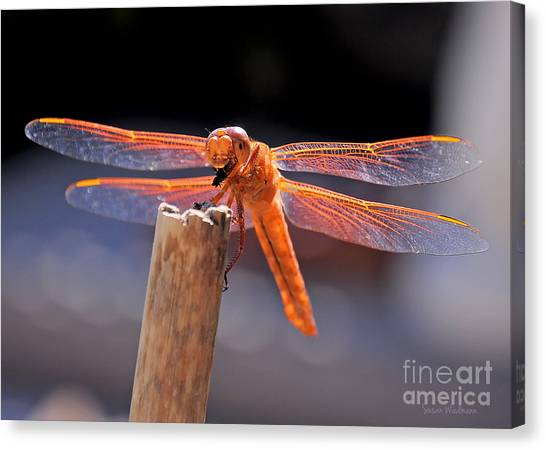 Dragonfly Eating An Insect Canvas Print