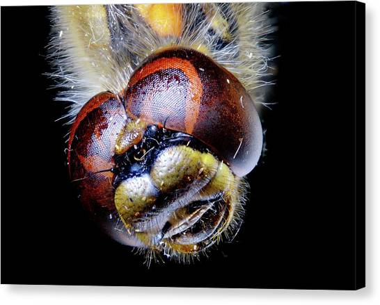 Dragonfly Head Canvas Print by Heiti Paves