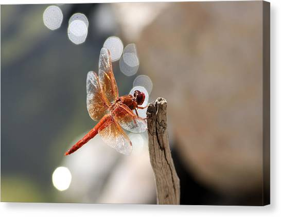 Dragonfly Highlights Canvas Print