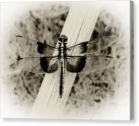 Dragonfly In Sepia Canvas Print