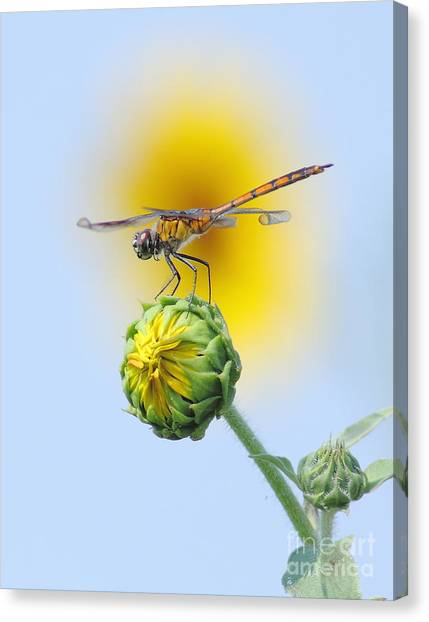 Minnesota Wild Canvas Print - Dragonfly In Sunflowers by Robert Frederick