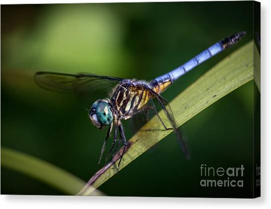 Dragonfly In The Wind Canvas Print