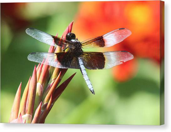 Dragonfly Canvas Print by Jill Bell