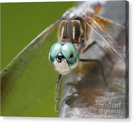 Dragonfly Macro Canvas Print