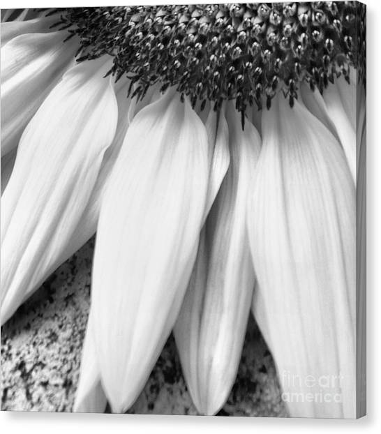 Drained And Still Beautiful Canvas Print