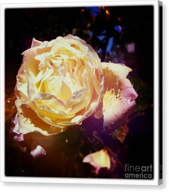 Dramatic Rose Canvas Print