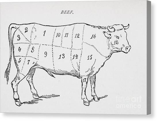Steak Canvas Print - Drawing Of A Bullock Marked To Show Eighteen Different Cuts Of Meat by English School