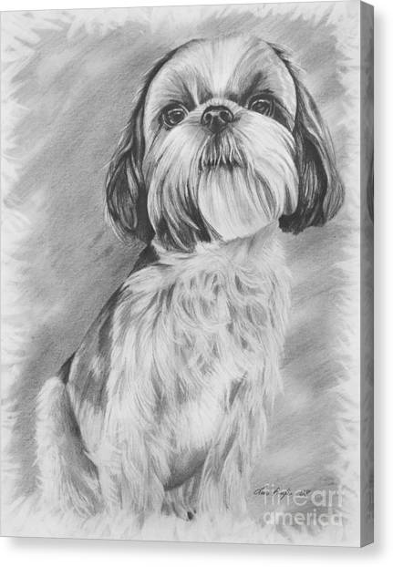 Shih Tzus Canvas Print - Drawing Of A Shih Tzu by Lena Auxier