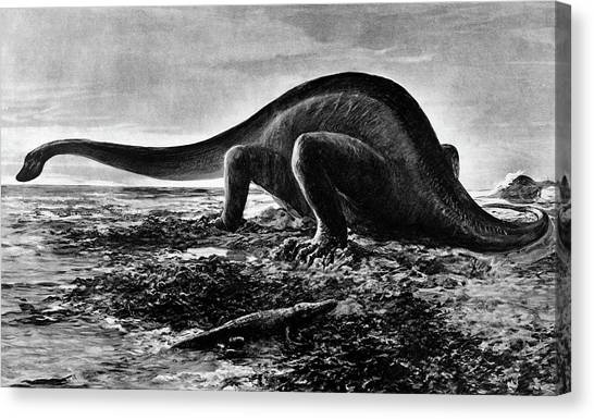 Brontosaurus Canvas Print - Drawing Of Giganotosaurus By A by Animal Images