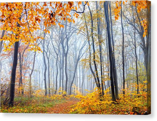 Danube Canvas Print - Dream Forest by Evgeni Dinev