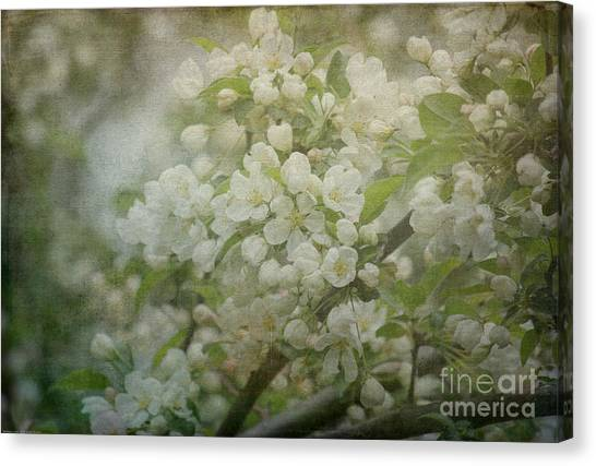 Dream Of Spring Canvas Print